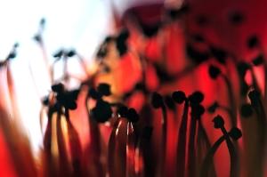 flowers misc8